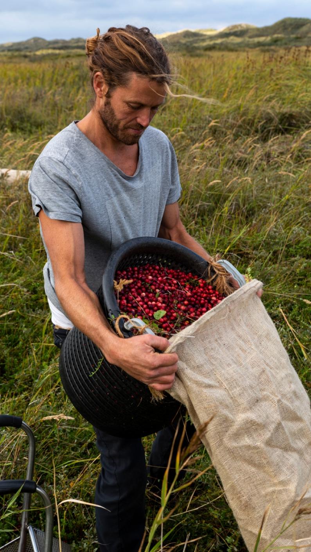 Cranberry Terschelling